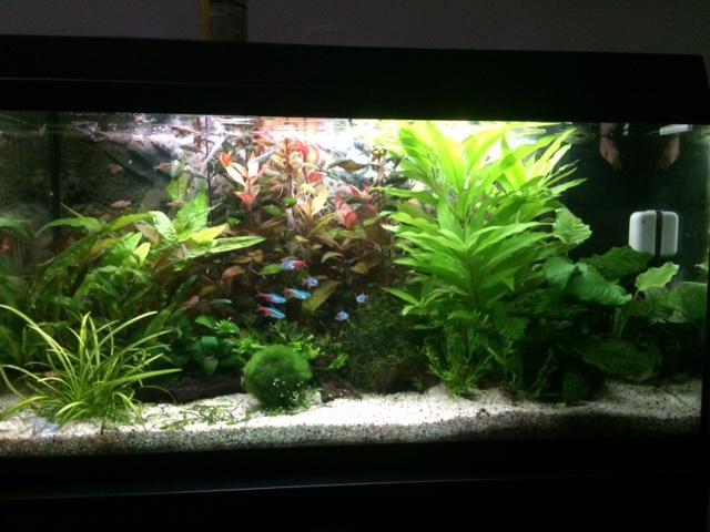 Show je Aquarium
