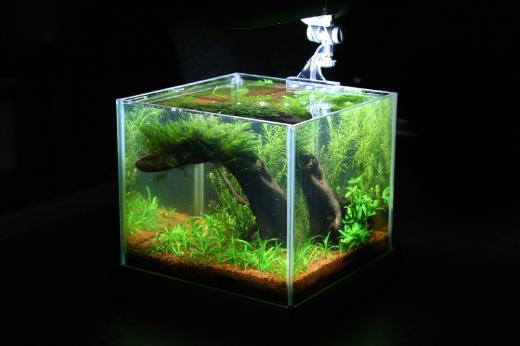 Show je Aquarium      Showcase van wilco