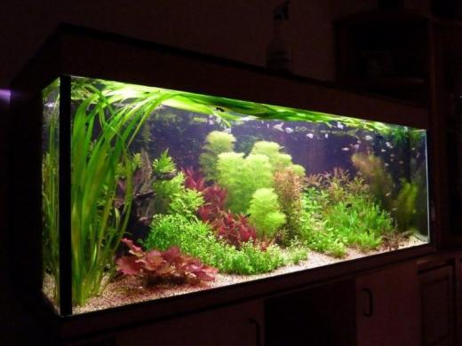 Show je Aquarium      Showcase van Commo