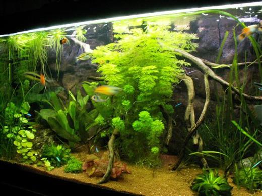 Show je Aquarium      Showcase van PeterTH