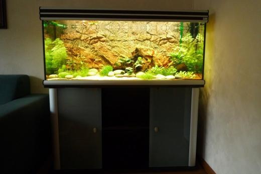 Show je Aquarium      Showcase van rvs