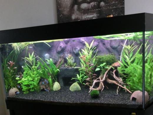 Show je Aquarium      Showcase van costabratte