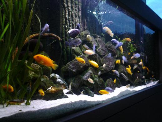 Speciaalaquarium