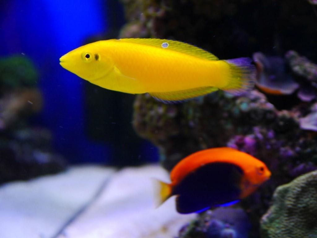 Zeewateraquarium