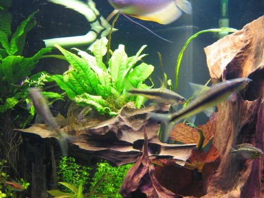 Show je Aquarium      Showcase van visionmaster