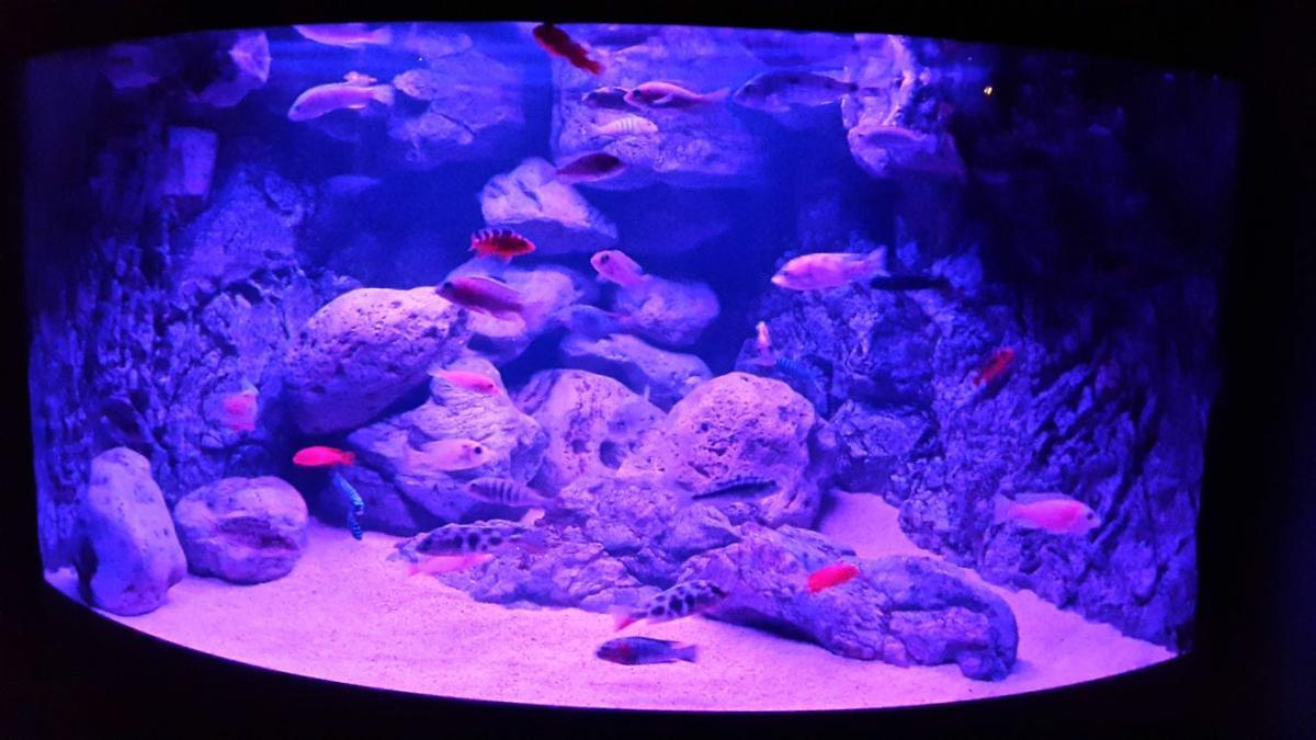 Show je Aquarium :: - Showcase van hans1981.