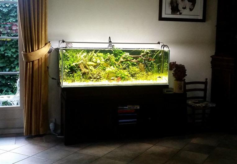 Aquarium Ideeen Inrichting.Show Je Aquarium