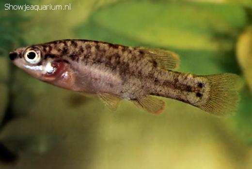 Zoogeneticus quitzeoensis